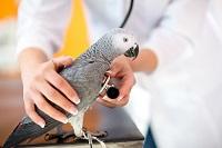 L'observance du traitement en médecine des animaux de compagnie