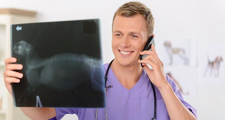 Télémédecine vétérinaire