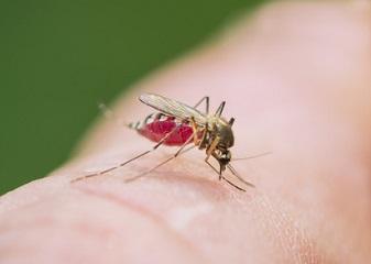 Paludisme : en automne aussi ! Un risque qui reste mortel