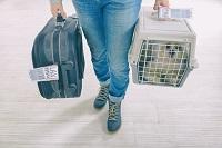 animal, voyage, formalités