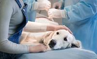 Prévenir le maître de l'animal en cas de complications